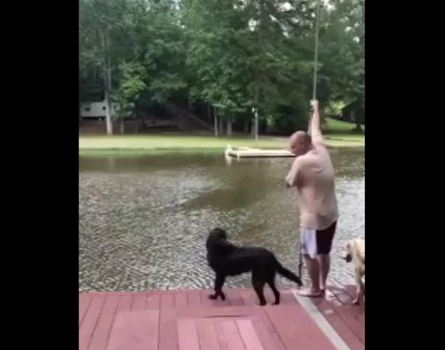 Собаки у реки