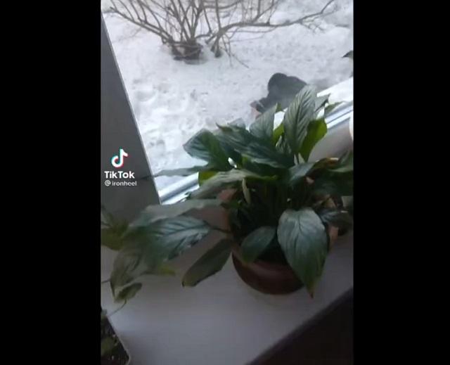 парни копаются в снегу
