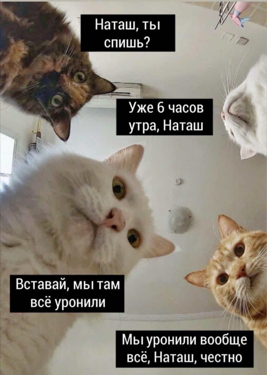 """Создательница мема """"Наташ, мы все уронили"""" Дарья Бородулина решила зарегистрировать авторские права (фото + видео)"""