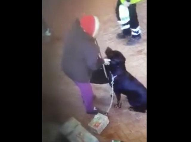 бабушка гладит собаку