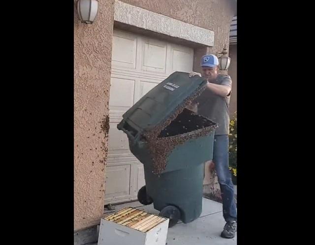 мусорный контейнер с пчелами