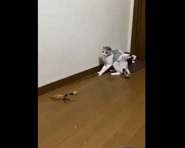 кот с удочкой