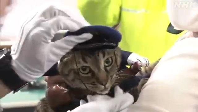 В Японии кошка стала начальником полиции