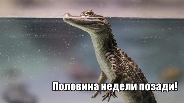 Трынделка - 28.04.2021