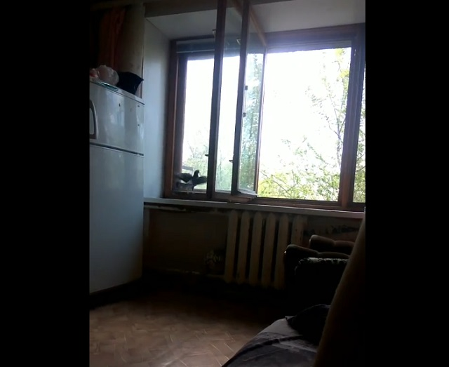 голубь в квартире