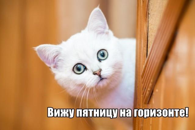 Трынделка - 13.05.2021