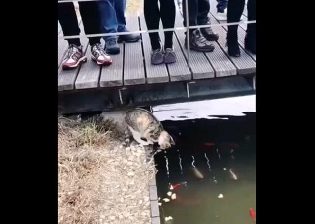 кот у реки
