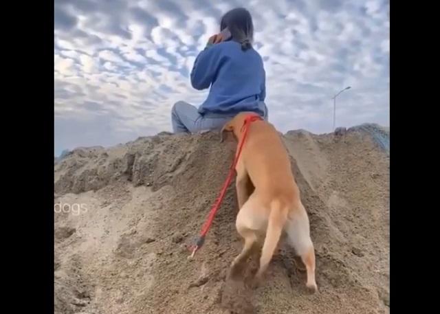 Пес на пляже
