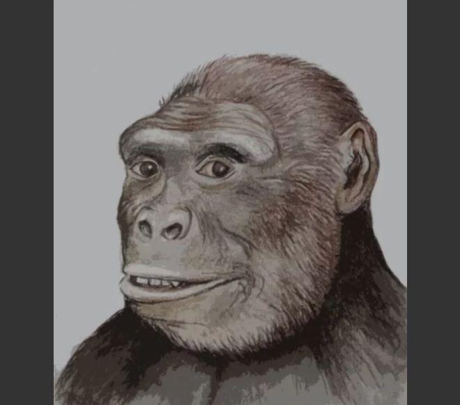 Интересный мысленный эксперимент: что будет, если выстроить всех своих предков в одну линию — от родителей до периода существования тиктаалика? (5 фото)