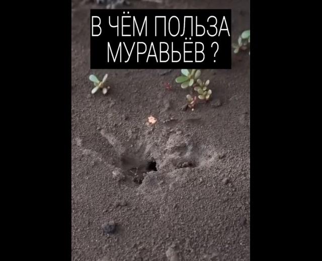 в чем польза муравьев
