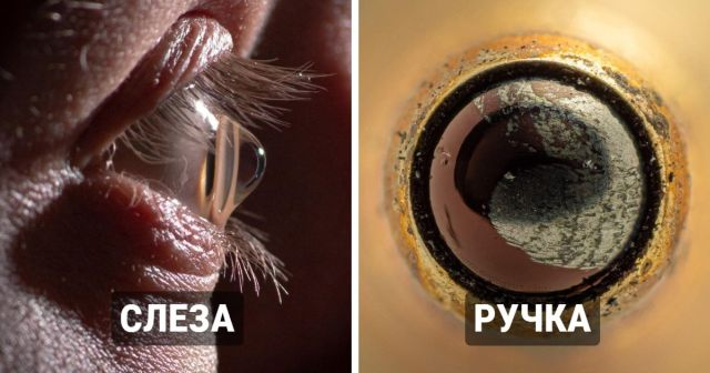 Мир через микроскоп: интересные макрофотографии