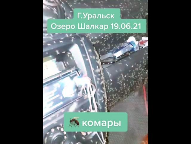 Комариный апокалипсис в Уральске