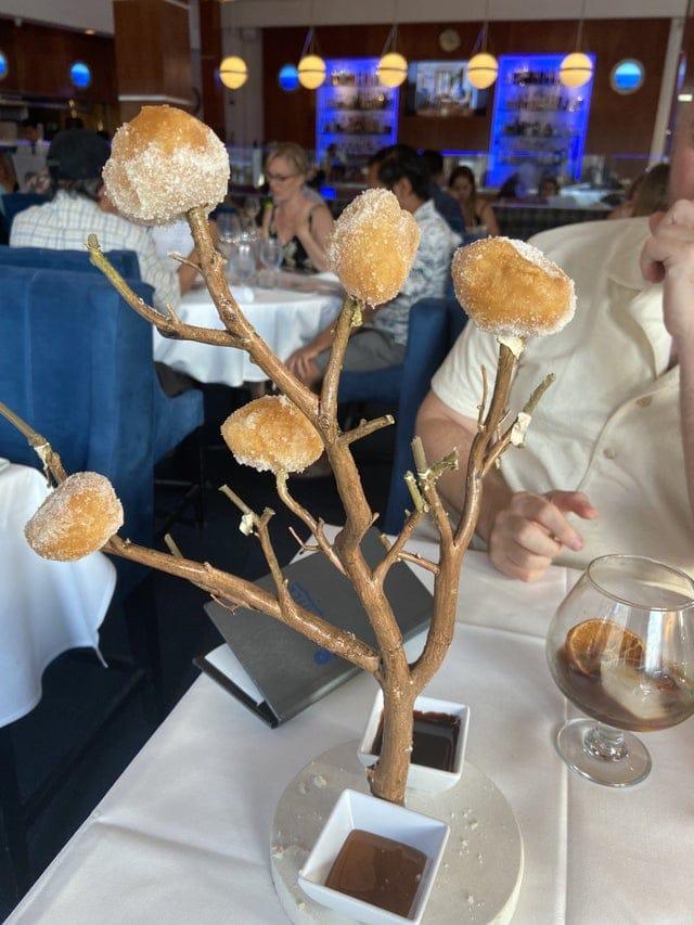 Пончиковое дерево дало свои первые ростки