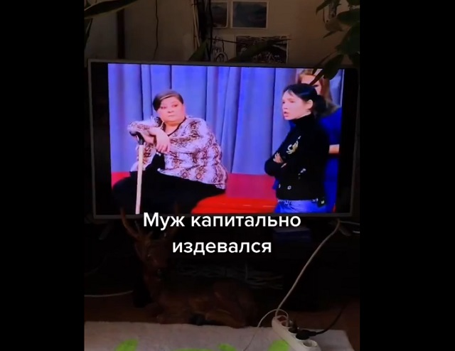 теле-шоу