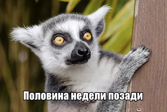 Трынделка - 21.07.2021