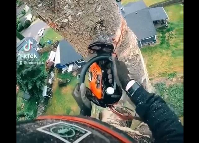 дровосек на дереве