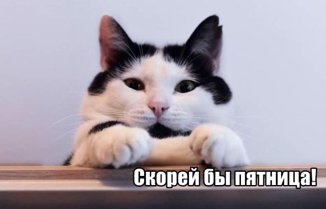 Трынделка - 03.08.2021