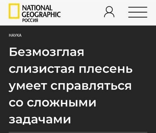 Подборка убойных заголовков из российских СМИ (14 фото)