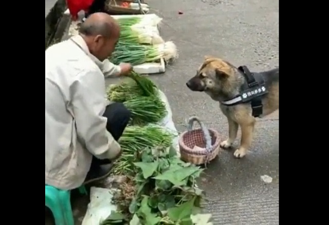 собака на рынке