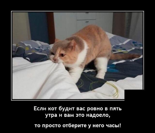 1629990552_demotivatory_10.jpg
