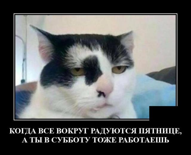 1629990570_demotivatory_03.jpg