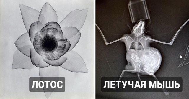 Подборка необычных рентгеновских снимков
