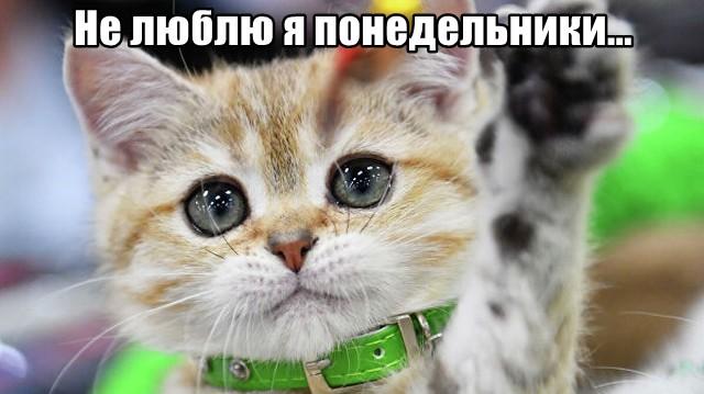 Трынделка - 06.09.2021