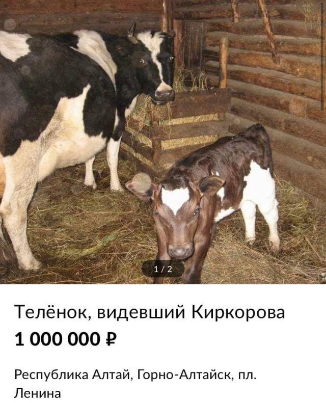 теленок за один миллион рублей