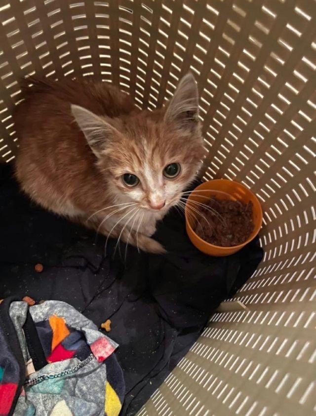 кот в корзинке
