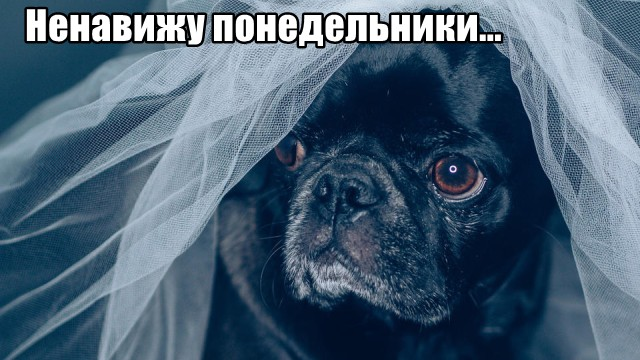 Трынделка - 20.09.2021