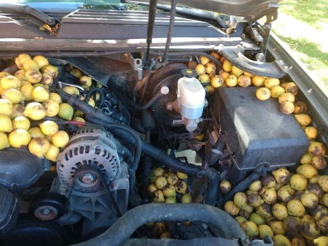 Машина с орехами