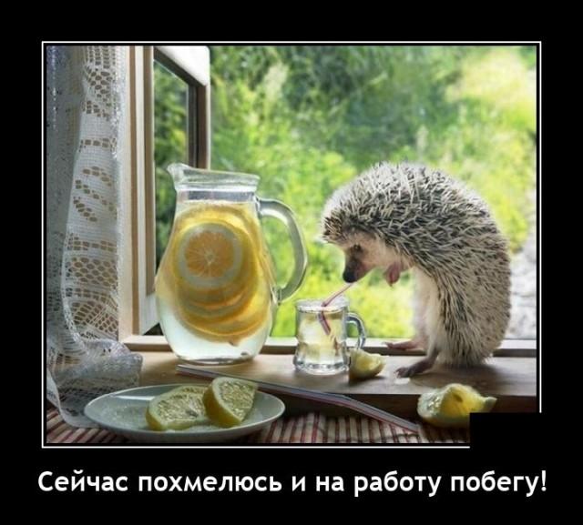 1633611392_demotivatory_10.jpg