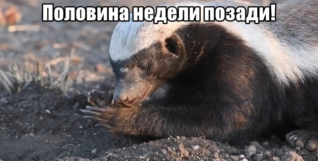 Трынделка - 20.10.2021