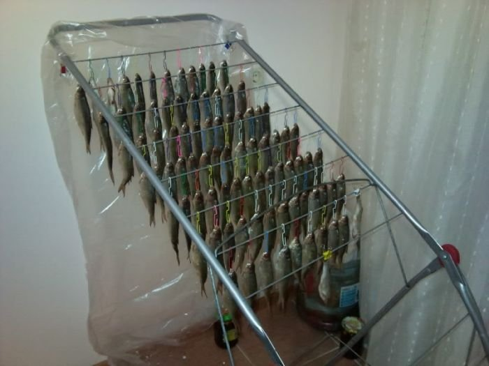 Как сделать приспособление для сушки рыбы