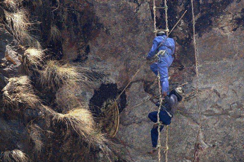 Высоко в предгорьях Гималайских гор, в центральном Непале охотники за медом из племени гурунг дважды в год, рискуя жизнью, взбираются на крутые утесы скал, чтобы забрать мед у самых крупных и опасных пчел в мире