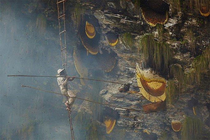 мед в непальских горах