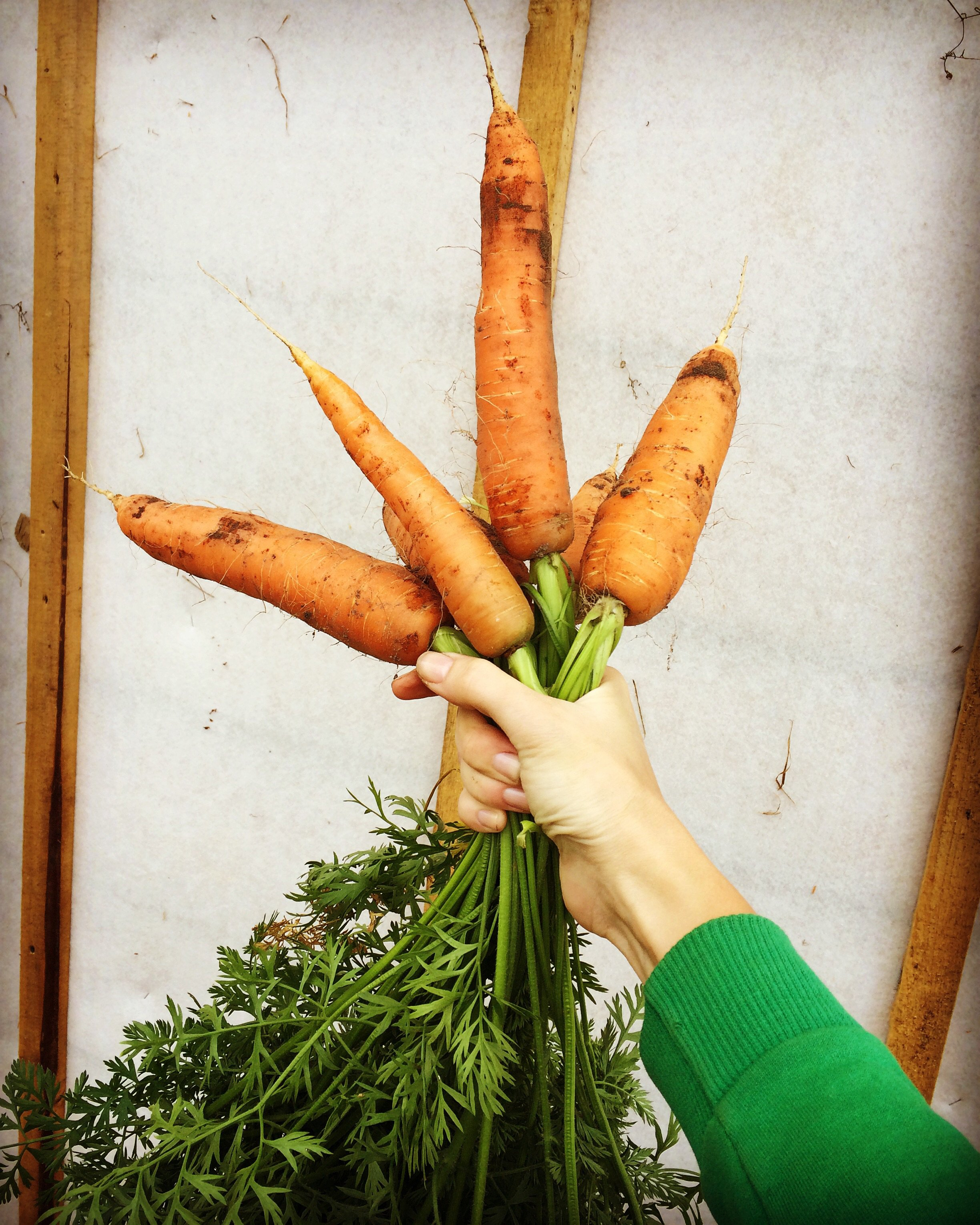Поздравление на свадьбу вот тебе морковка 635
