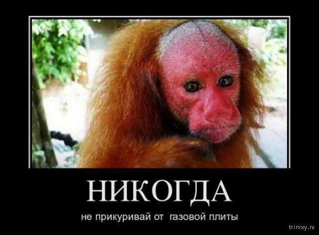 http://trinixy.ru/uploads/posts/comm_images/2016-03/1458840100_plita.jpg